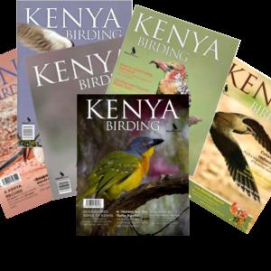 kenya-birding