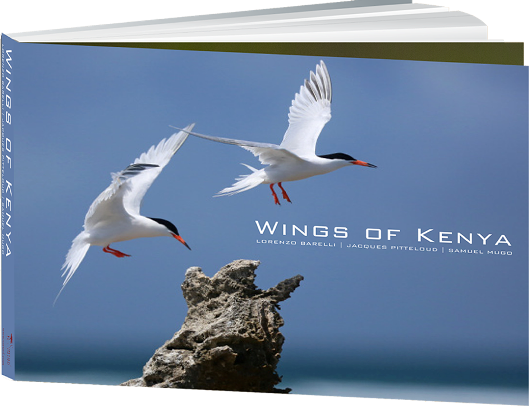 wings-of-kenya