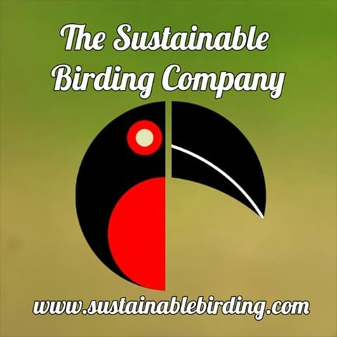 sustainable-birding