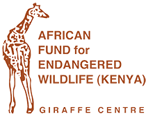 giraffe-centre-new-logo