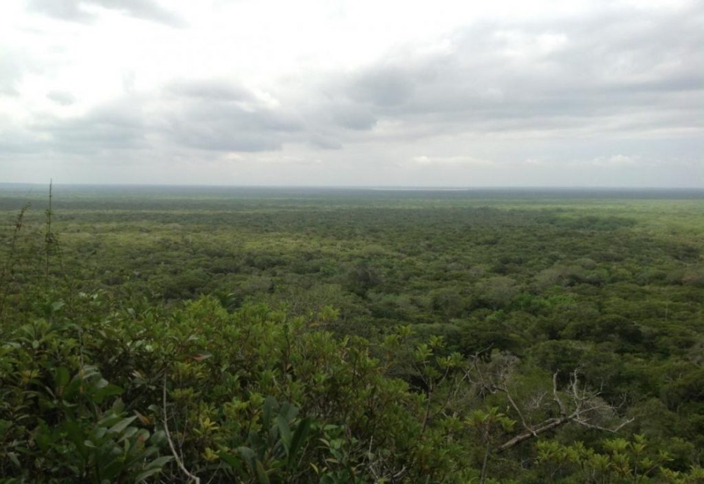 00027_arabuko_a_birds_eye_view_of_the_forest_from_nyari_view_point