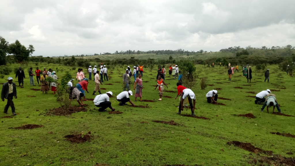 "Members of the KBL ""Kijani Team"", & Nature Kenya staff , Hombe and Kabaru Community CFAs  during a tree planting exercise in Mt. Kenya Forest"