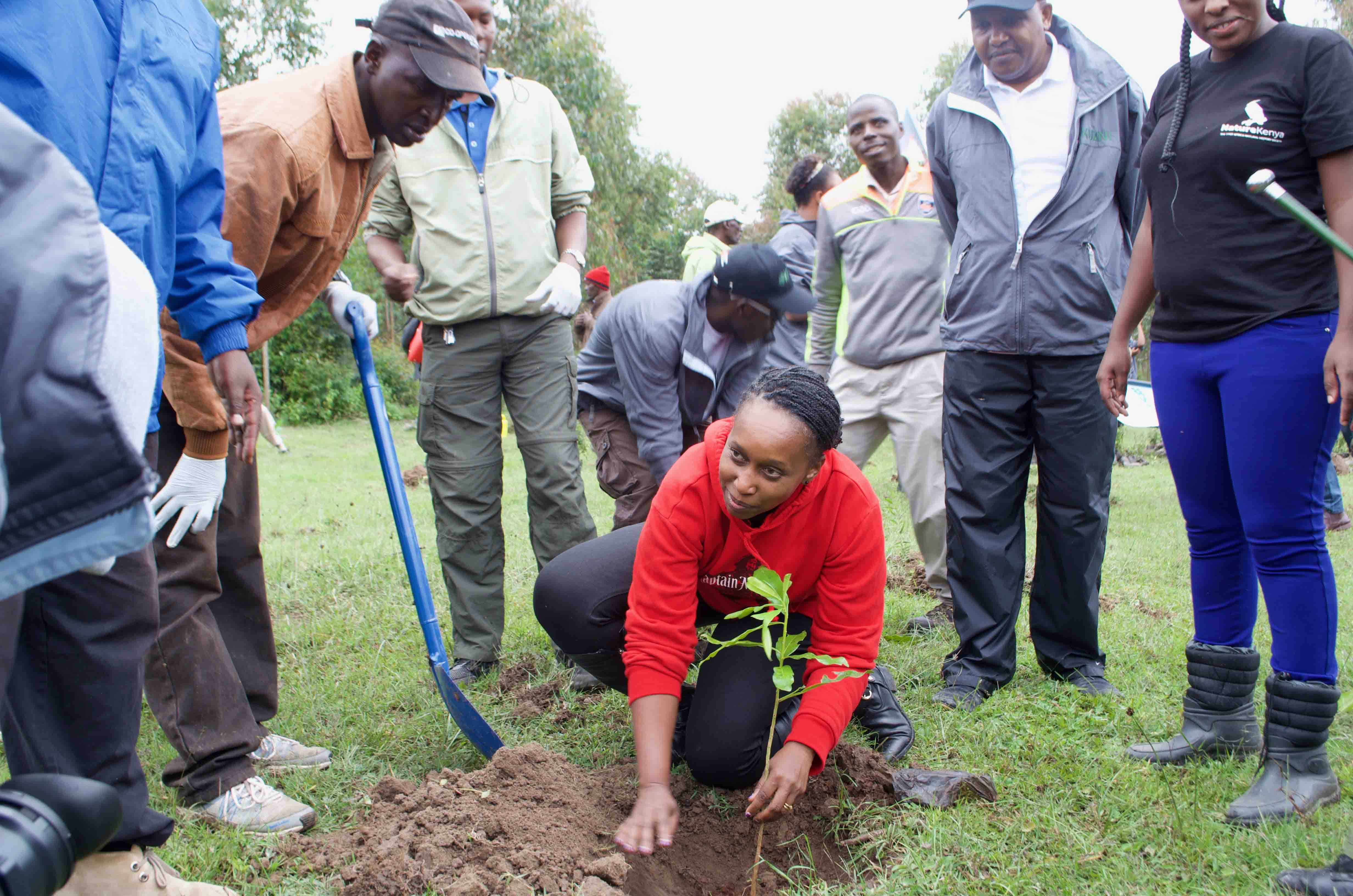Ms. Kinya Kimotho plants a tree at Naro Moru to launch phase two of the Mt. Kenya Forest restoration initiative