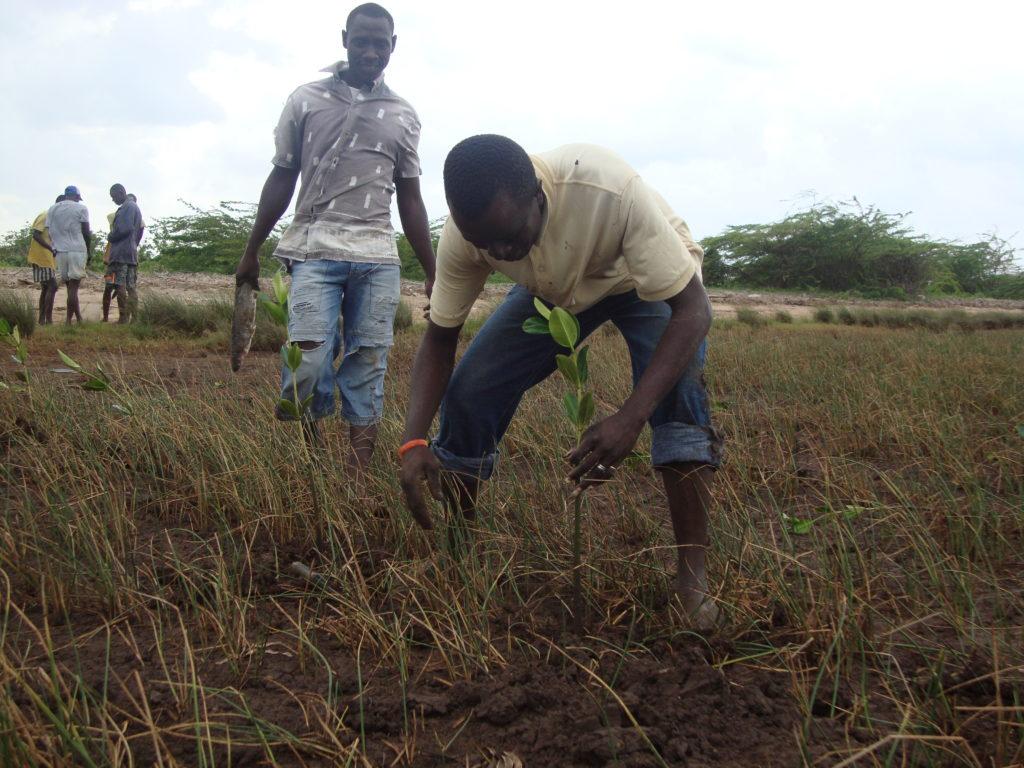 mangrove planting by SSG members-edwin