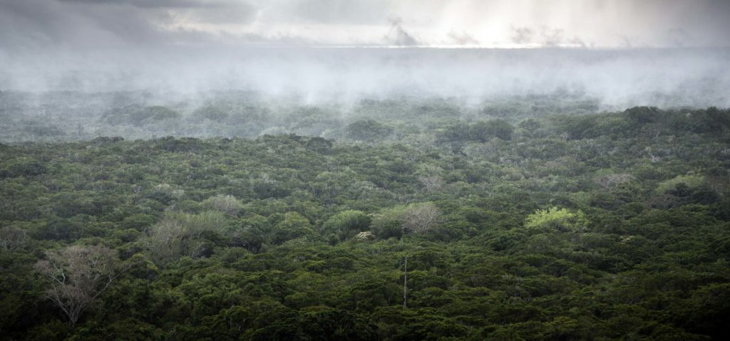 Rain falls and mist rises from Kenya's Arabuko Sokoke Forest as the sun rises over the Indian Ocean, November 14, 2014. Arabuko Sokoke, where US and Chinse companies are due start looking for oil and gas, is the largest coastal forest in East Africa, the second most important forest in Africa in terms of biodiversity after the Congo. It is home to more than 100 forest elephants and a number of endangered mammals and birds, some of which live no where else on earth.